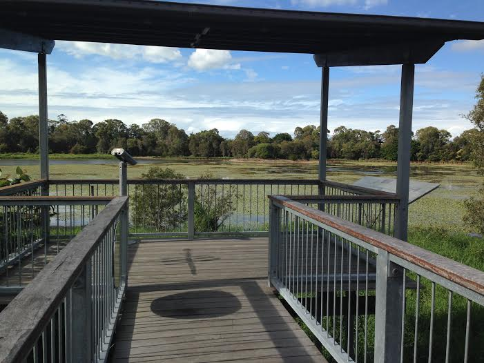 Dowse Lagoon Viewing Platform Sandgate Queensland