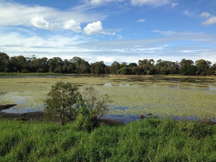 Dowse Lagoon Sandgate Queensland